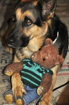 Dogs and their teddy bears