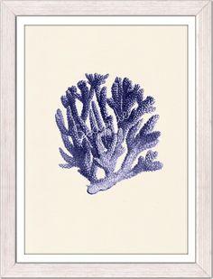 Blue coral no.06 - sea life print - free shipping. $12.00, via Etsy.