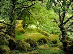Hauntings and legends of Wistmans Wood, Dartmoor, UK  This strange and twisted woodland is thought to be one of the few remnants of ancient woodland dating from prehistoric times. The woodland broods with the feeling of enchantment and visiting the wood is like a walk in the otherworld.