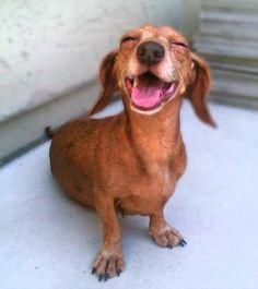 It's the WEEKEND! Enjoy it! #Doxie #Weekend #DoxieMom #WienerDog #Happy