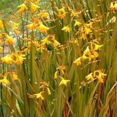 Phoenix Perennials - E-Newsletter - April 2016