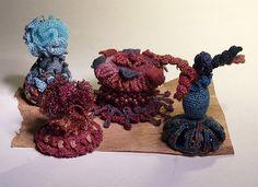 Infant reef gathering | Flickr - Photo Sharing!