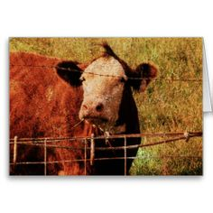 Friendly Cow, Father's Day Greeting Card