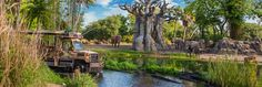 QUIZ: Kilimanjaro Safaris at Disney's AnimalKingdom