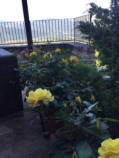 il colore giallo è simbolo della luce del sole e anche dell'energia... le rose gialle del nostro giardino... con annessa veduta della Val Comino ...