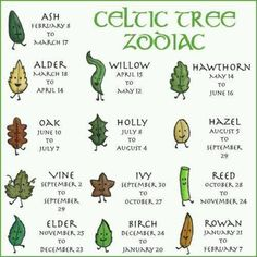 Celtic Tree Zodiac