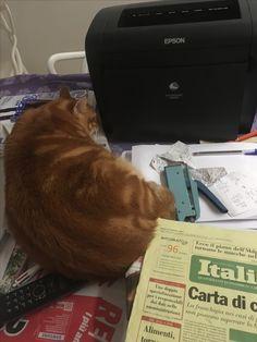Romeo dorme sulle scartoffie e robe varie...Starà comodo????)!