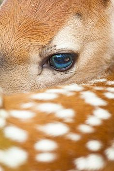 funkysafari: A baby whitetail deer in northern Wisconsin. byjerry mercier