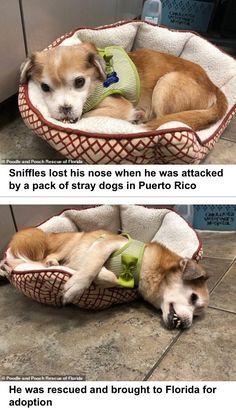 Dogs Friend Cute Funny Pet Dog Friends Funny Animals Pets