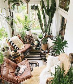 houseplants and cactus