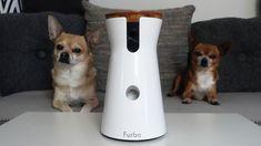Unsere Furbo Hundekamer. #Furbo #CaughtonFurbo #DogCamera #FurboTreatTime