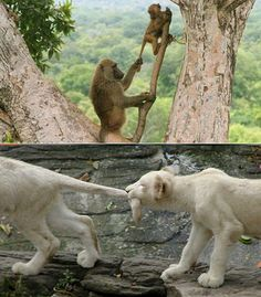 People are way more temperamental than animals! If a person had a tail an you did this.... They'd punch you! Lol