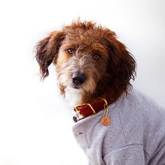 """""""Only thing I'm letting loose tonight is my hair.. Sometimes Friday's are for your favorite comfies & a romcom"""" writes @moosebythesea #dogsofinstagram #dog #cat #followback #cats"""