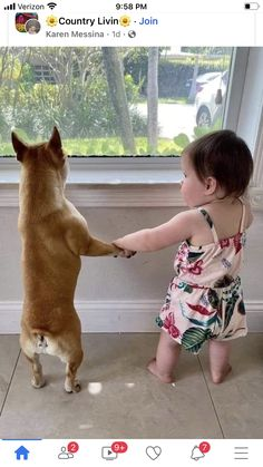 Me And My Dog, Pet Dogs, Corgi, Creatures, Summer Dresses, Animals, Photos, Fashion, Colorful Wallpaper