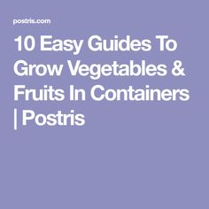10 Easy Guides To Grow Vegetables & Fruits In Containers | Postris