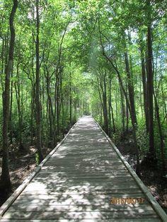 Okefenokee Swamp Park, Ware County GA