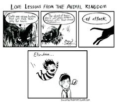 Love lessons from the animal kingdom