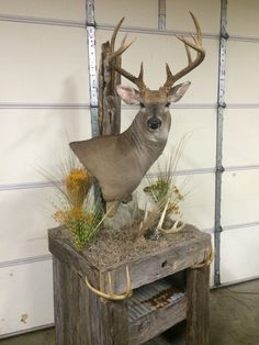 Deer Pedestal Mount and Table More