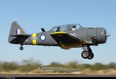 North American AT-6C Harvard. South African Air Force.