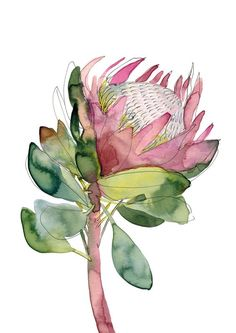 Australian native flora art prints by Natalie Martin, featuring her vibrant watercolour artworks. Limited edition, archival quality prints on beautiful textured paper. Flor Protea, Protea Art, Protea Flower, Watercolor Artwork, Watercolor Print, Watercolor Flowers, Drawing Flowers, Botanical Art, Botanical Illustration