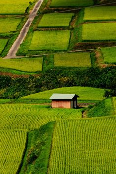 Lonely home in the middle of Nozawa Onsen Rice Paddies, Japan | Incredible Pictures