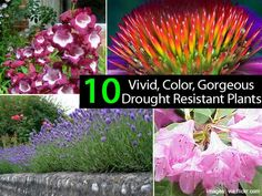 It seems like somewhere across the country some area will experience drought conditions. Even with such conditions we still want color in the landscape. Over at House Logic they have put together a slide show of 10 drought resistant plants that provide color. Do you have any in your landscape? Check out the 10 at …