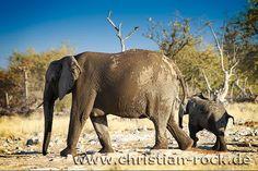 Happy family. Elephant mother and child in Namibia, Africa. Etosha National Park.