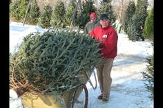 Find local Christmas tree farms with the free Minnesota Grown Directory published by the Minnesota Department of Agriculture. Choose from Christmas tree farms and farmer owned tree lots throughout Minnesota.