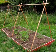 tomatoes bed--I could do this under the swing set since our grandkids aren't coming this summer.
