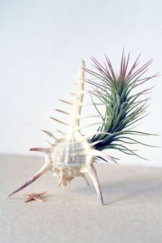 air plant  REALLY want this one