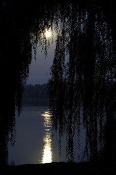Moon under the Spanish Moss