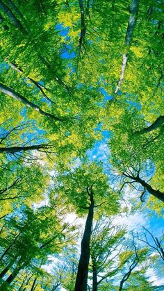 Image via We Heart It #wallpapers #greentrees