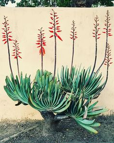Amazing Unusual Plants To Grow In Your Garden Succulents Garden, Planting Flowers, Paradise Plant, Planting For Kids, Large Flower Pots, Easy Plants To Grow, Cactus Painting, Unusual Plants, Different Plants
