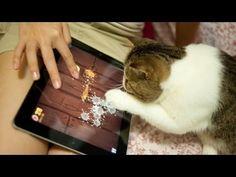 Cats Playing Fruit Ninja - YouTube