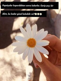 Daisy Love, Beautiful Words, Wallpaper, Plants, Pictures, Instagram, Istanbul Turkey, Twitter, Quotes