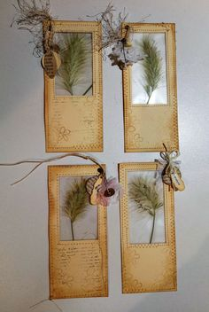 I don't have flowers in my garden but I do have grasses growing on the footpath. Pressed, dried and laminated, I think they make nice journaling cards. Journal Paper, Journal Cards, Junk Journal, Art Journals, Handmade Journals, Handmade Books, Handmade Crafts, Paper Art, Paper Crafts