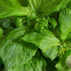 Shiso   Plant Capsule for Smart Garden   Plantui Kinds Of Soup, Decorative Leaves, Smart Garden, Homemade Lemonade, Cold Desserts, Big Leaves, Exotic, Plants, Plant