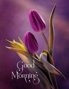 Good Morning Happy Saturday, Monday Morning Quotes, Good Morning Cards, Morning Morning, Good Morning Picture, Morning Greeting, Good Morning Images Flowers, Morning Pictures, Good Morning Motivational Messages