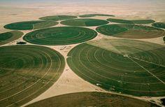 Tak wyglądają pola w Zjednoczonych Emiratach Arabskich. www.rolnikon.pl