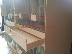 「bourke parakeet breeding cage」の画像検索結果
