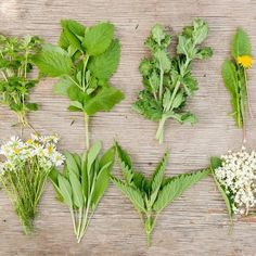 Wild herbs: These superfoods grow for free on your doorstep - from nettle to chickweed - collect healthily! - Wild herbs: These superfoods grow for free on your doorstep – from nettle to chickweed – collec - Superfoods, Home Remedies, Natural Remedies, How To Clean Humidifier, Types Of Humans, Flu Like Symptoms, Health Images, Healthy Seeds, Healthy Food