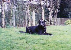 Gus, splitting behaviour dogs, canine communication, dog social skills