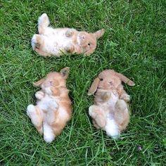 Drie konijnen zo mooi lagen op een grasveld zo leuk en lief