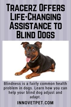 Whether your #dog was born #blind, developed blindness as the result of an illness or gradually lost her vision with age, she can still #live a #happylife.