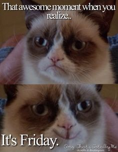 Here's a gift for Grumpy cat lovers.Hopefully you love to Grumpy cat.Well, here's collection of some Grumpy cat Memes Monday that are so funny.Read This 27 Grum Funny Grumpy Cat Memes, Funny Friday Memes, Cat Jokes, Friday Humor, Funny Memes, Meme Meme, Grumpy Car, Monday Memes, 9gag Funny