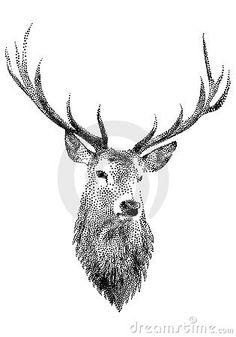 Deer head,  by Wolfgang Kraus, via Dreamstime