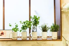create a modern window display with a set of mugs featuring the names of herbs. | shutterfly.com 670herbgarden