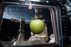 Fresh Apple Near Cupola Window in ISS