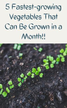 Fast Growing Vegetables, Fast Growing Plants, Carrot Varieties, Fall Crops, Shaded Garden, Growing Spinach, Garden Soil, Planting Seeds, Gardening Tips