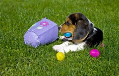 Ideas for Easter Fun with your Dog on the BestBullySticks Healthy Dog Blog! #dog #dogfun #dogcare #easter // BestBullySticks.com